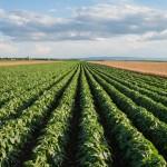 Soybeans edge lower