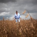Argentine grain farmers slowly start selling after devaluation