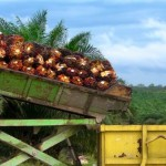 Trump and a Possible El Nino May Confound Palm Oil Market Bears