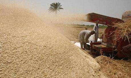 wheat_egypt