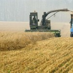 Russian Wheat Sellers Undercut by Europe as Ruble Strengthens