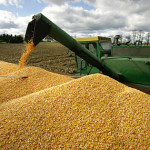 U.S. corn planting seen 31 pct complete, slowed by rain