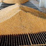 Brazilian exporters unfazed by strong U.S. corn, soy demand