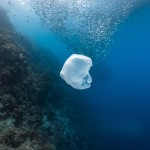 WWF: Med states falling short in marine environment protection