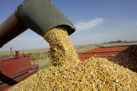 commodity-corn